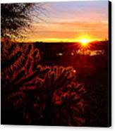 Cholla On Fire Canvas Print by Kelly Gibson