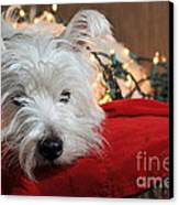 Christmas Westie Canvas Print by Catherine Reusch  Daley