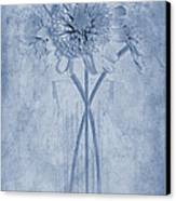 Chrysanthemum Cyanotype Canvas Print by John Edwards