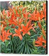 Cincture Of Lilies Canvas Print by Sonali Gangane