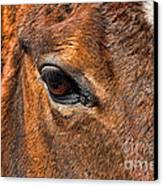 Close Up Of A Horse Eye Canvas Print by Paul Ward