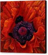 Close Up Poppy Canvas Print by Billie Colson
