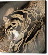 Clouded Leopard - National Zoo - 01134 Canvas Print by DC Photographer