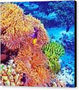 Clown Fish In Coral Garden Canvas Print by Anna Omelchenko