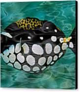 Clown Triggerfish Canvas Print by Jack Zulli