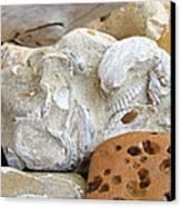 Coastal Shell Fossil Art Prints Rocks Beach Canvas Print by Baslee Troutman