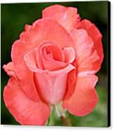 Cobra Rose  Canvas Print by Christine Till