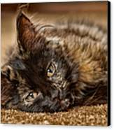 Coco Kitten Canvas Print by Trever Miller