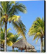 Coconut Palm Forest Canvas Print by Charline Xia