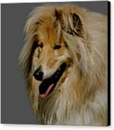 Collie Dog Canvas Print by Linsey Williams