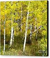 Colorado Autumn Canvas Print by Baywest Imaging