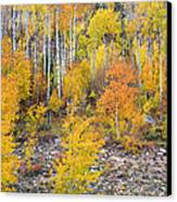 Colorful Autumn Forest In The Canyon Of Cottonwood Pass Canvas Print by James BO  Insogna