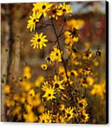 Colors Of Autumn Canvas Print by Sabrina L Ryan
