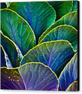 Colors Of The Cabbage Patch Canvas Print by Christi Kraft