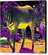 Colourful Zebras  Canvas Print by Aidan Moran