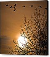 Coming Home In The Spring Canvas Print by Bob Orsillo