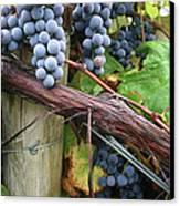 Concord Purple Canvas Print by Wendy Raatz Photography