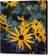 Cone Flowers Canvas Print by Marcio Faustino