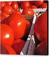 Cool Tomatoes Canvas Print by Barbara McDevitt