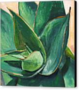 Coral Aloe 3 Canvas Print by Athena Mantle