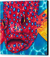 Coral Grouper Canvas Print by Daniel Jean-Baptiste