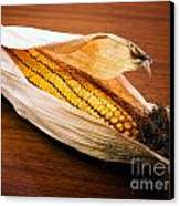 Corn Ear Canvas Print by Sinisa Botas