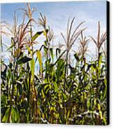 Corn Production Canvas Print by Carlos Caetano