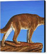 Cougar Cliff Canvas Print by Crista Forest