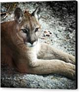 Cougar Country Canvas Print by Karen Wiles