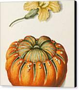 Courgette And A Pumpkin Canvas Print by Joseph Jacob Plenck