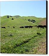 Cows Along The Rolling Hills Landscape Of The Black Diamond Mines In Antioch California 5d22346 Canvas Print by Wingsdomain Art and Photography