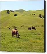 Cows Along The Rolling Hills Landscape Of The Black Diamond Mines In Antioch California 5d22350 Canvas Print by Wingsdomain Art and Photography