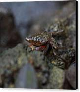 Crab In Mangrove Forest In Los Haitises National Park Dominican Republic Canvas Print by Andrei Filippov