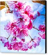 Crabapple Impressions Canvas Print by Bob Orsillo