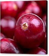 Cranberry Closeup Canvas Print by Jane Rix