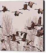 Cranes Across The Sky Canvas Print by Don Schwartz