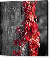 Creeper On Pole Desaturated Canvas Print by Teresa Mucha