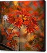 Crown Of Fire Canvas Print by Mike Reid