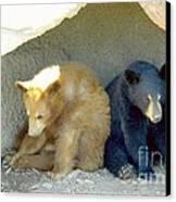 Cubs In A Pod Canvas Print by Kim Petitt