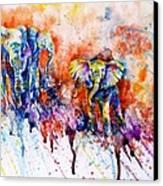 Curious Baby Elephant Canvas Print by Zaira Dzhaubaeva