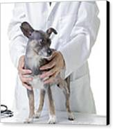 Cute Little Dog At The Vet Canvas Print by Edward Fielding