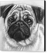 Cute Pug Canvas Print by Olga Shvartsur