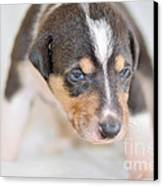 Cute Smooth Collie Puppy Canvas Print by Martin Capek