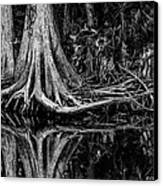 Cypress Roots - Bw Canvas Print by Christopher Holmes