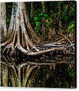 Cypress Roots Canvas Print by Christopher Holmes