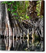Cypress Trees - Nature's Relics Canvas Print by Christine Till