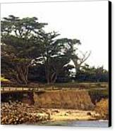 Cypress Trees On 17 Mile Drive Canvas Print by Barbara Snyder