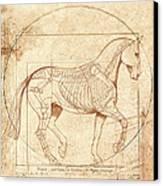 da Vinci Horse in Piaffe Canvas Print by Catherine Twomey