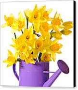 Daffodil Display Canvas Print by Amanda And Christopher Elwell