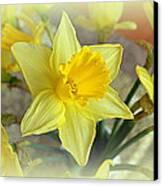 Daffodil Canvas Print by Bishopston Fine Art